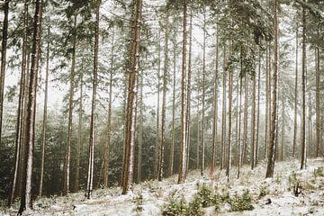 Dromerig sneeuw landschap op de Lemelerberg bij Ommen van Holly Klein Oonk