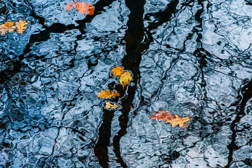 Drijvende herfstbladeren; reflecterende bomen