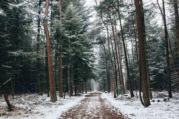 Wald im winter von Lars Korzelius