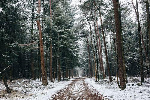 Mastbos in de winter van