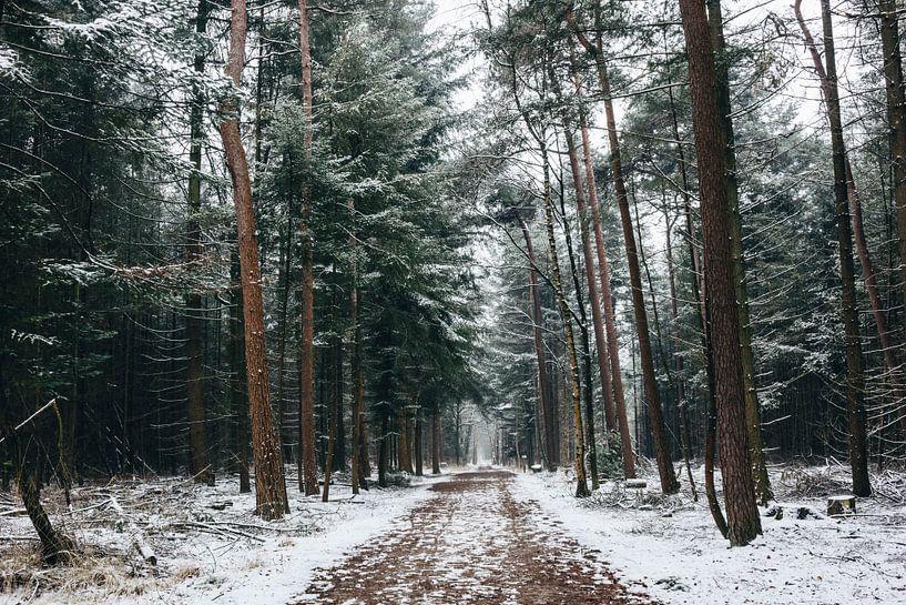 Mastbos in de winter van Lars Korzelius