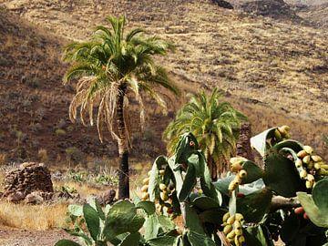 Tropisch Gran Canaria van