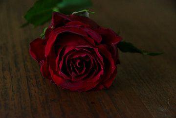 Eine gefallene Rose von Jurjen Jan Snikkenburg