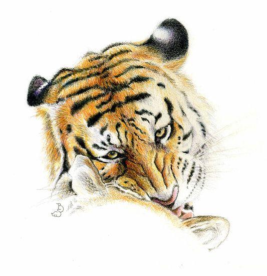 Siberische tijger van Bianca Tekent