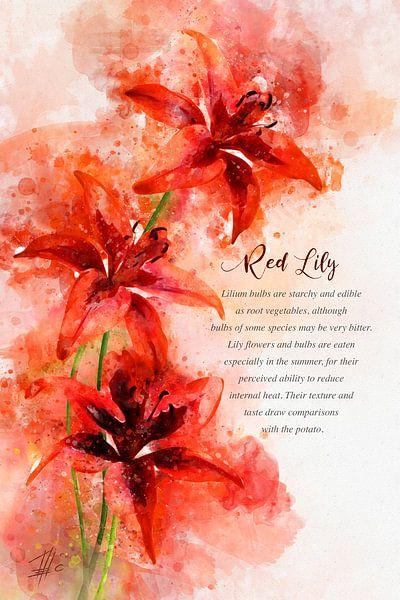 Rote Lilie von Theodor Decker