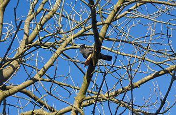 Kraai in de boom met een stuk brood van Berthilde van der Leij