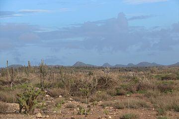 Landschaft auf Bonaire. von Silvia Weenink