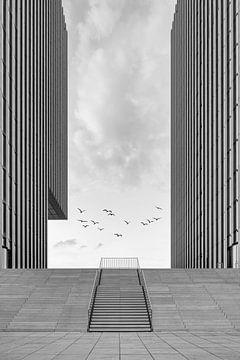 Hafenspitze Düsseldorf schwarz-weiß von Michael Valjak