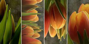 Tulpen x 4