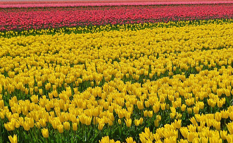 Tulpenveld van JTravel