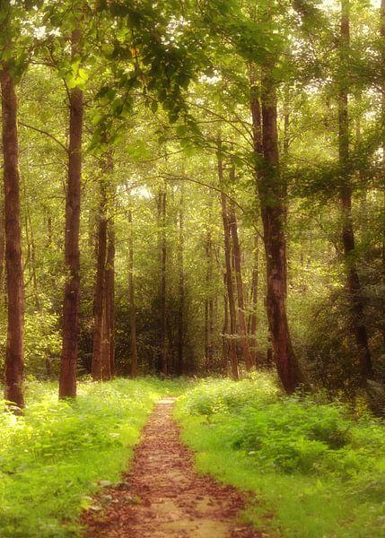 romantic forest path van Yvonne Blokland