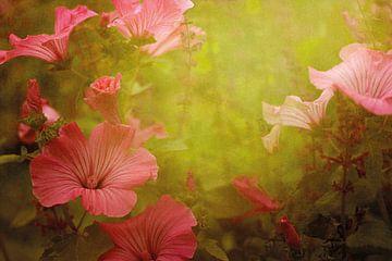 Bloemen, Malva van Marijke van Loon