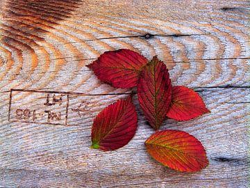 Blad-Hout...(Bladeren op Hout) van Caroline Lichthart