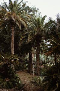 Botanische tuin - palmbomen van Anne Verhees