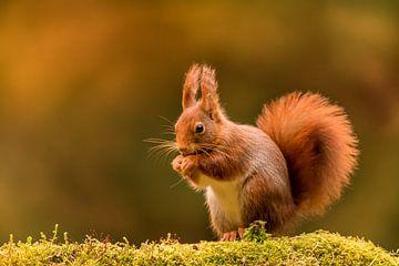 Eichhörnchen von Andy Luberti