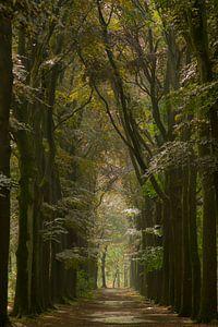Schöne Farben nach Regen im Wald von Sabina Meerman