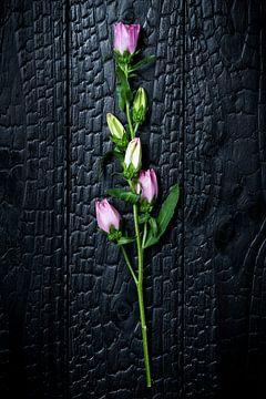 Blume 001 von Mo Barends