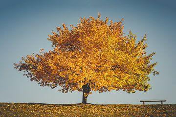 Gouden herfst -De boom en de bank van Jonathan Schöps | UNDARSTELLBAR
