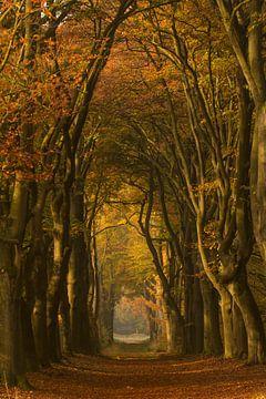 Herfstwandeling in het bos in het ochtendlicht van Marjon Meinders