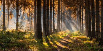 Panorama herfstbos in de mist met zonneharpen