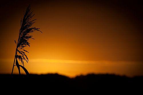 silhouet in de ochtendzon van