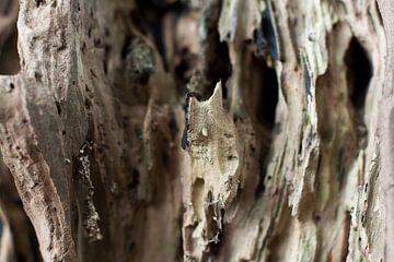 Landschap van hout van