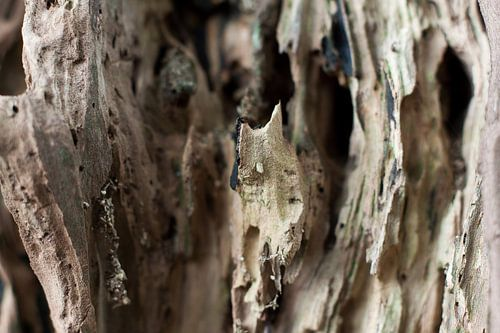 Landschap van hout