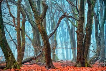 Tanz im Morgengrauen, Speulder Wald von Lars van de Goor