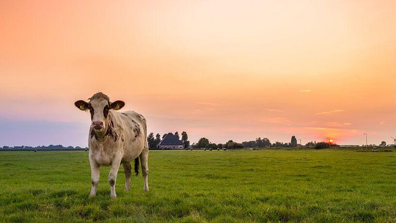 Zonnige koe van Chris Snoek