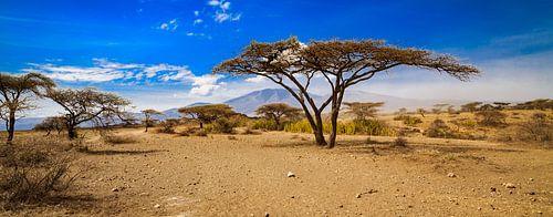 Serengeti van René Holtslag