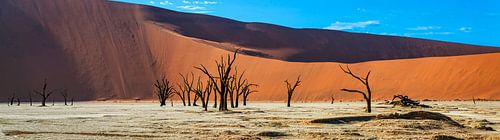 Panoramafoto van de Deadvlei, Namibië