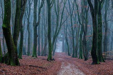Pad door het dansende bos van René Groenendijk