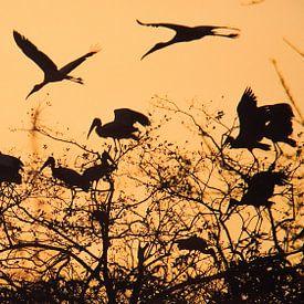 Vogelvlucht bij zonsondergang van Marije Zuidweg