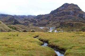 Cajas National Park, Ecuador von Tom Hengst