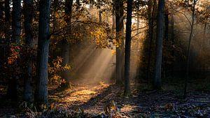 herfstmorgen in het mastbos van Rob Bout