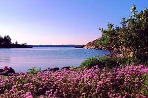 Soirée dans une baie près des îles finlandaises en été, Helsinki