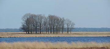 Eichen im Winter im Pflichtfeld von Wim vd Neut