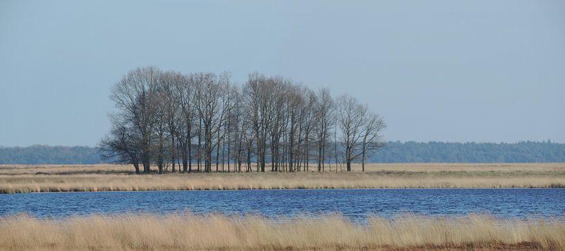 eiken in de winter in het dwingelderveld van Wim vd Neut