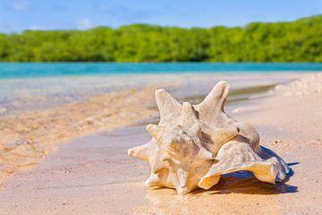 Karko schelp ligt op strand aan kust bij zee van Ben Schonewille