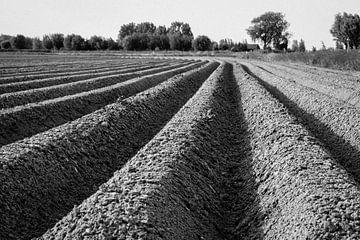 Kartoffelfeld von Frank Bison