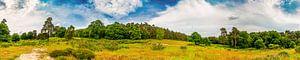 Panorama van een landschap met wilde weiden en bossen