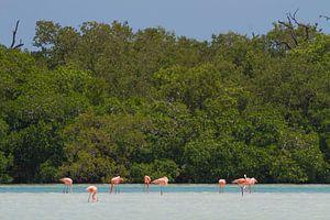 Flamingo's van