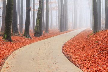 Door de bocht in het Edese bos in de herfst van