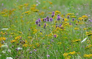 Sommerwiese von christine b-b müller