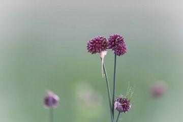 paarse wildgroei van Tania Perneel