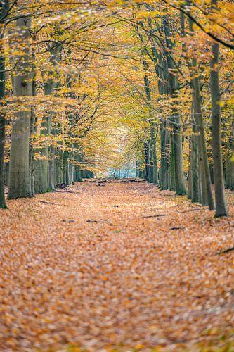 Wandelpad op de Veluwe met herfstbladeren