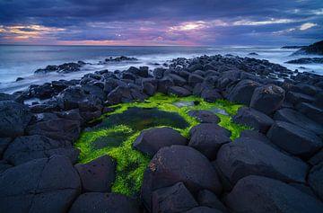 Der grüne Pool von Steven Driesen