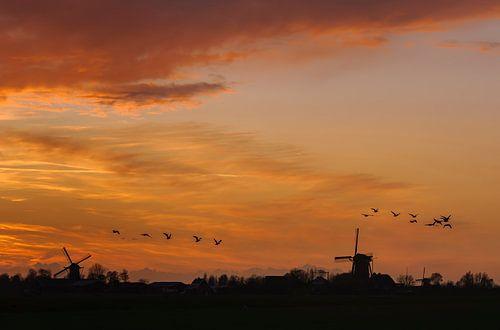 Typisch Nederlandse Zonsondergang van