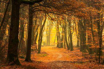 Pfad durch einen nebligen Wald an einem schönen nebligen Herbstmorgen. von Sjoerd van der Wal