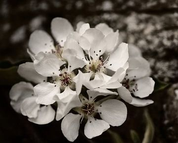 witte bloem van Saskia Schotanus